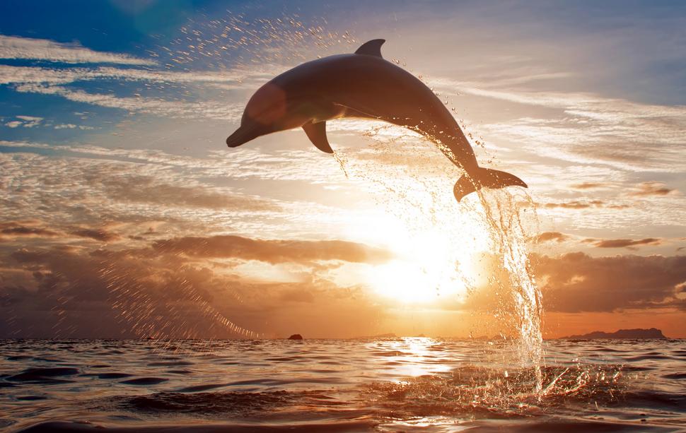 DolphinJump